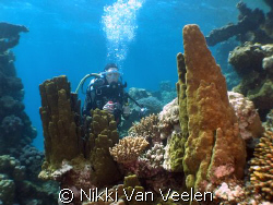 Anel amongst hard coral formations taken in Nabq Park wit... by Nikki Van Veelen 